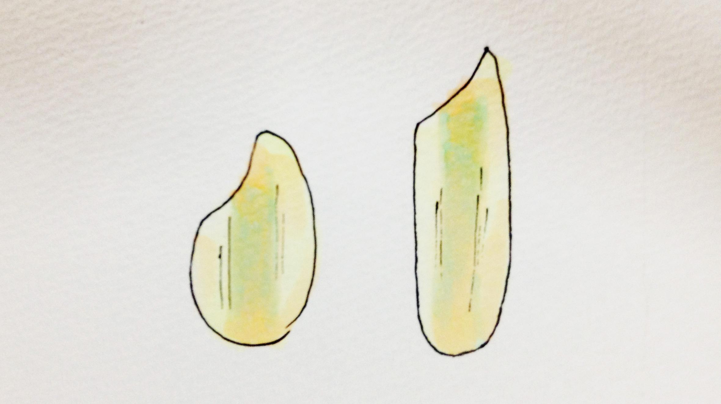 米のイラスト