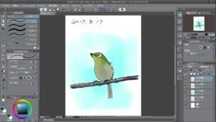 『鳥類学者だからって、鶏が好きだと思うなよ。』 メジロのイラスト - クリップスタジオ(クリスタ)